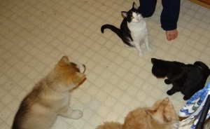 Leo (black/white cat), Ciara (black cat), Tink (orange cat), and Nero (dog)