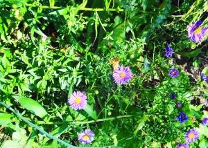 Adjusted Purple Flowers